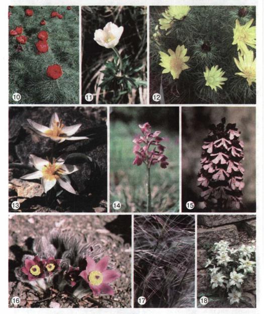 Охорона рослин червона книга україни