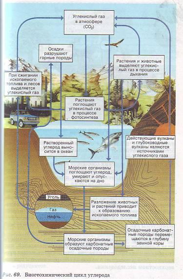 в круговороте фосфора.