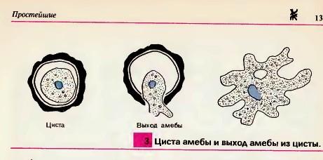 Гдз по Алгебре 10 Класс Мордкович 2012