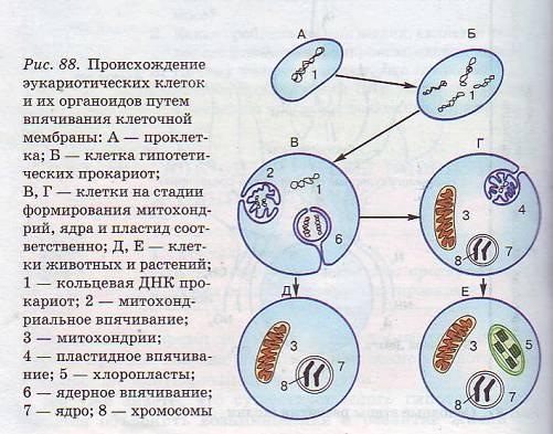 Гипотеза происхождения