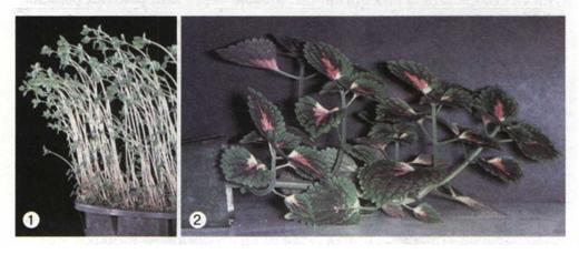 Рухи рослин фото