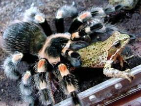 Клас павукоподібні повні уроки