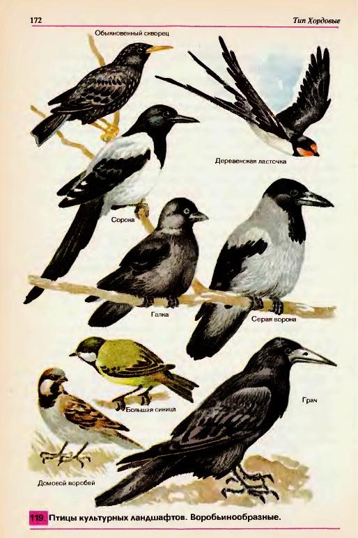карта рода птица с инструкцией