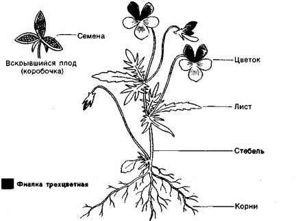 Царства рослини повні уроки