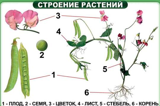 Priroda6 3 2.jpg