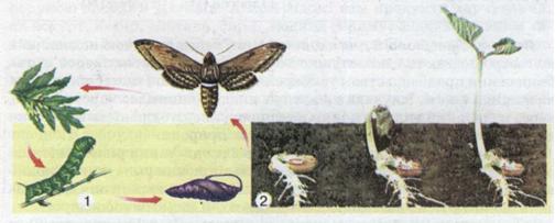 Ріст і розвиток тварини. фото