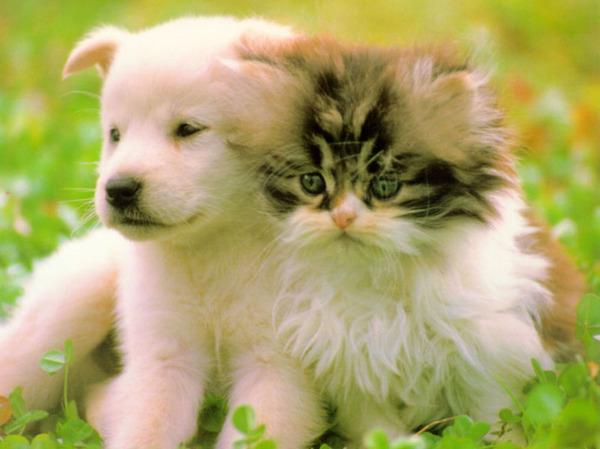 Пісня до теми домашні тварини