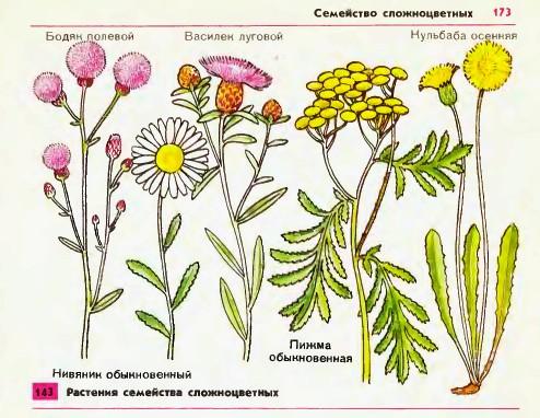 множество мелких цветков,