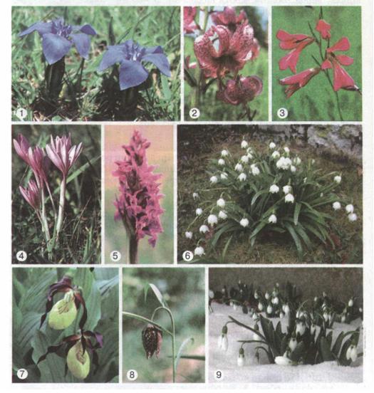 Мал 233 рослини червоної книги україни
