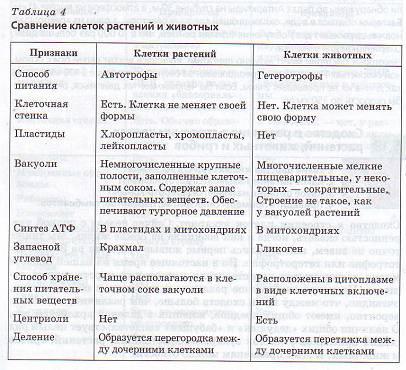 Таблица строения клеток