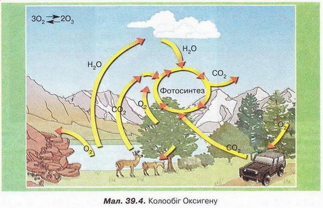 З колообігом оксигену нерозривно пов