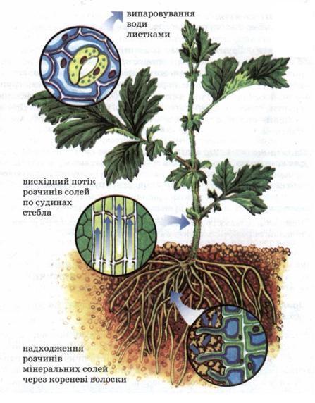 Мал 44 мінеральне живлення рослин