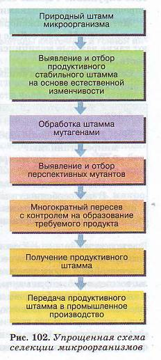 Методы селекции микроорганизмов
