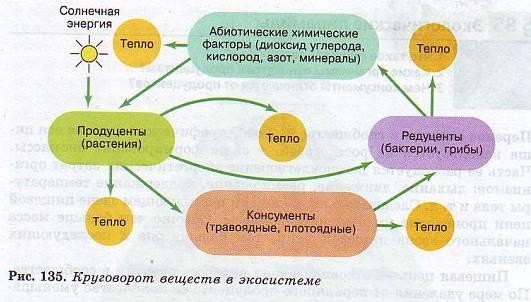 Реферат Тарас Шевченко Як Художник