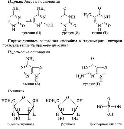 При мягком гидролизе нуклеиновых