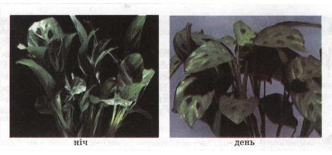 Добові ритми рослин  фото