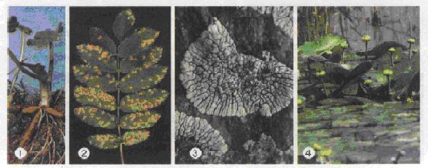 Файл:Мал. 3. Середовища життя організмів.jpg