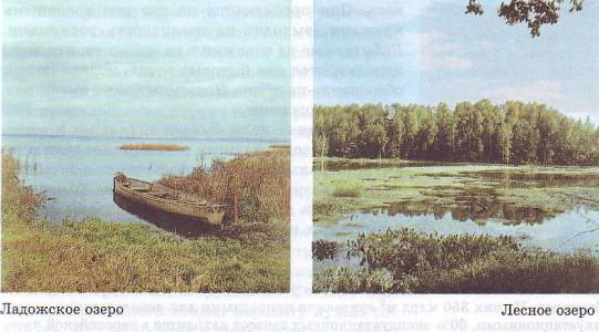 Ладожское озеро. Лесное озеро