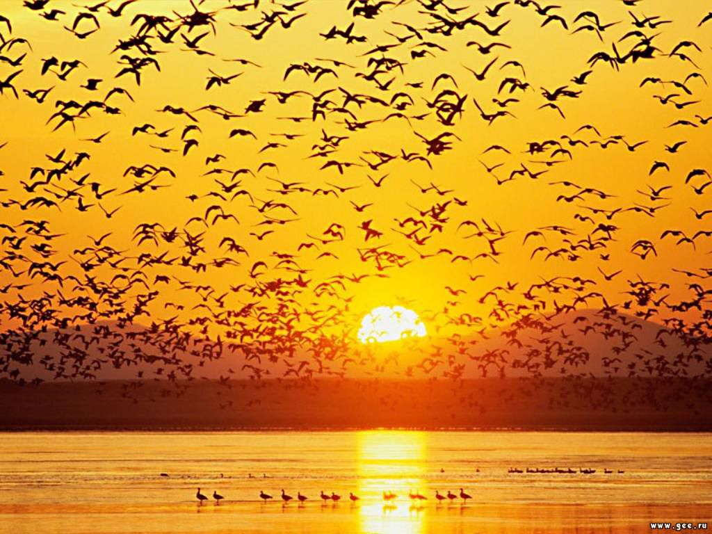 Чарівні трелі птахів це як правило