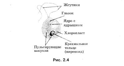 Пример модели одноклеточной