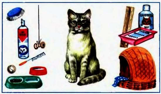 Содержание и уход за кошкой в домашних условиях 81