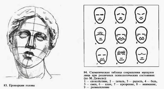 Пропорции головы. 84.