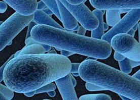 Мембрана бактерії