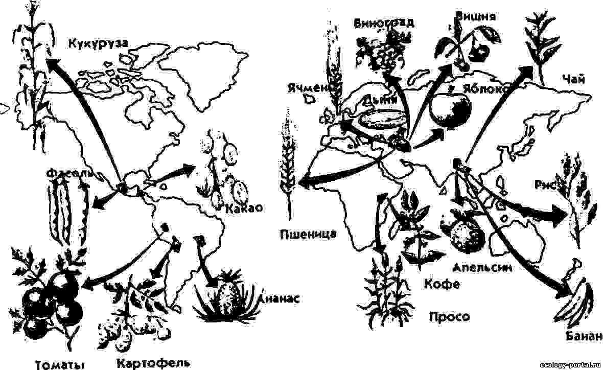Структура первичных связей между растениями и животными (Balogh, 1958).  Формирование газового состава атмосферного...