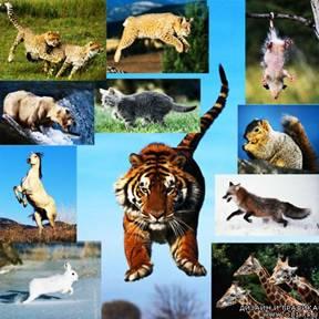 Тварини у  русі.