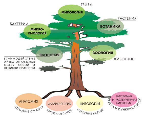 Конспекты уроков биология скачать