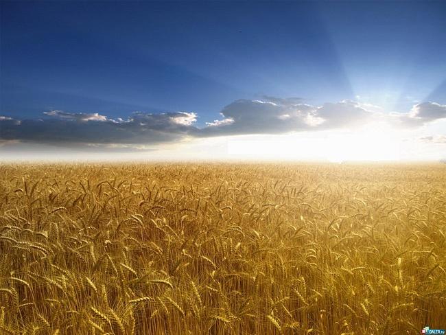 50% врожаїв Луганщини залишиться без стабільного ринку збуту