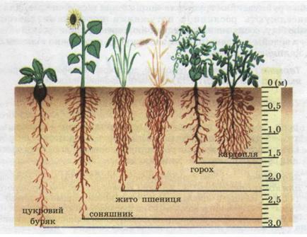 рослин різних видів.jpg