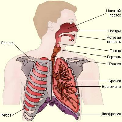 пути проникновения паразитов в организм человека