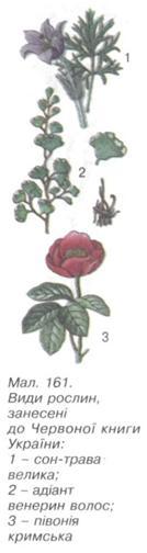 Рослини занесені до червоної книги
