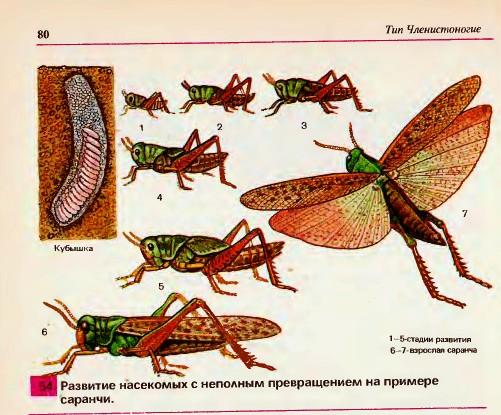 Класс насекомых делится на
