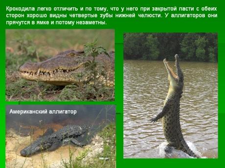 Різноманітність тварин у природі