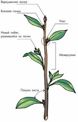Органи рослин тварин повні уроки