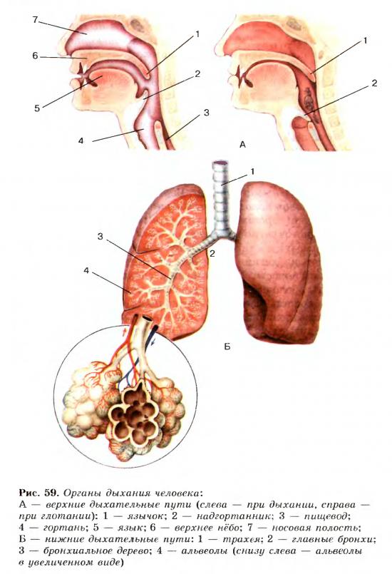 При дыхании с поверхности