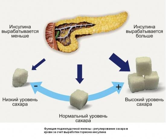 """Картинка 18 из презентации  """"Железы внутренней секреции """" к урокам биологии на тему  """"Анатомия человека """" ."""