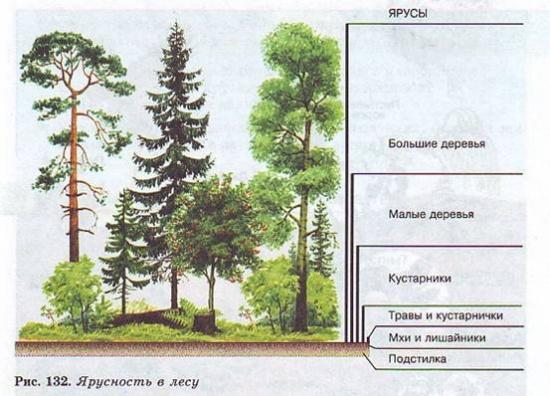 Растения разных ярусов живут в