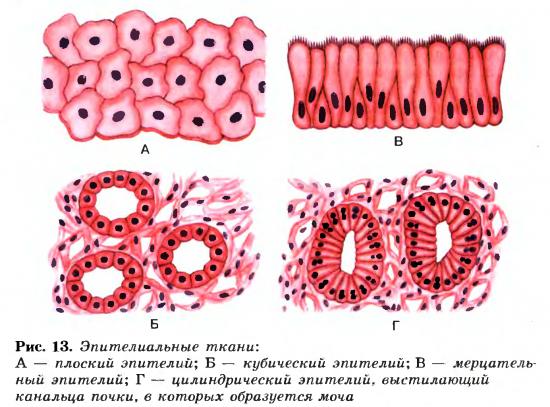 схема виды тканей — схема виды