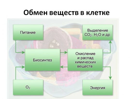 А также и схему обмена веществ