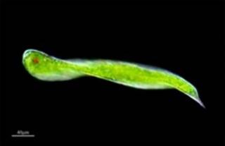 Одноклітинні організми явище