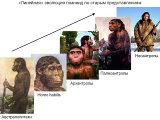 Еволюція гомінідів