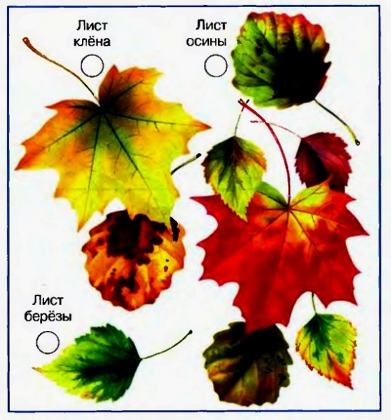 4 1 слово лист клена цветы