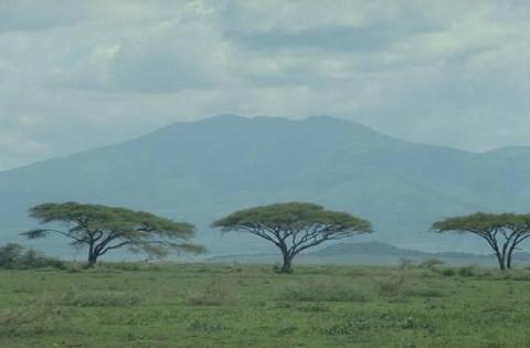 Екваторіальні ліси повні уроки