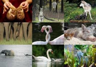 Мами та їх дитинчата. Таємний світ тварин.