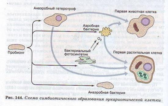 Гипотезы происхождения