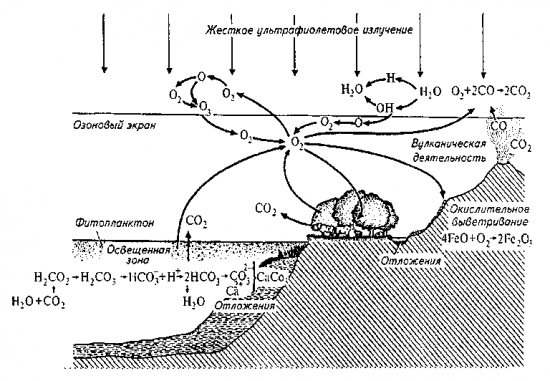 Схема круговорота кислорода в природе.