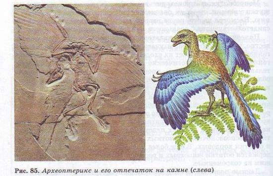Все находки археоптерикса относятся к